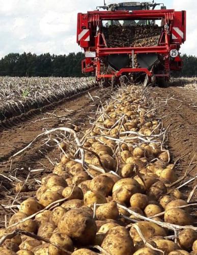Kartoffelhof Rathing - Schwadleger